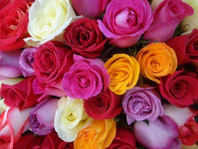 К чему дарят черные розы согласно народным суевериям