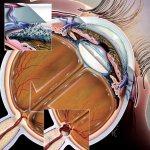 10 простых упражнений для восстановления зрения