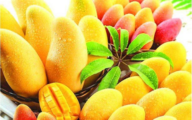 Что сделать чтобы манго дозрело