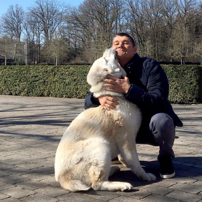 Александр Онищенко, крутивший романы со многими знаменитостями, считает, что преданнее собак никого нет