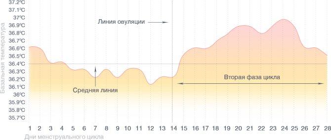 Базальный график при нормальном цикле