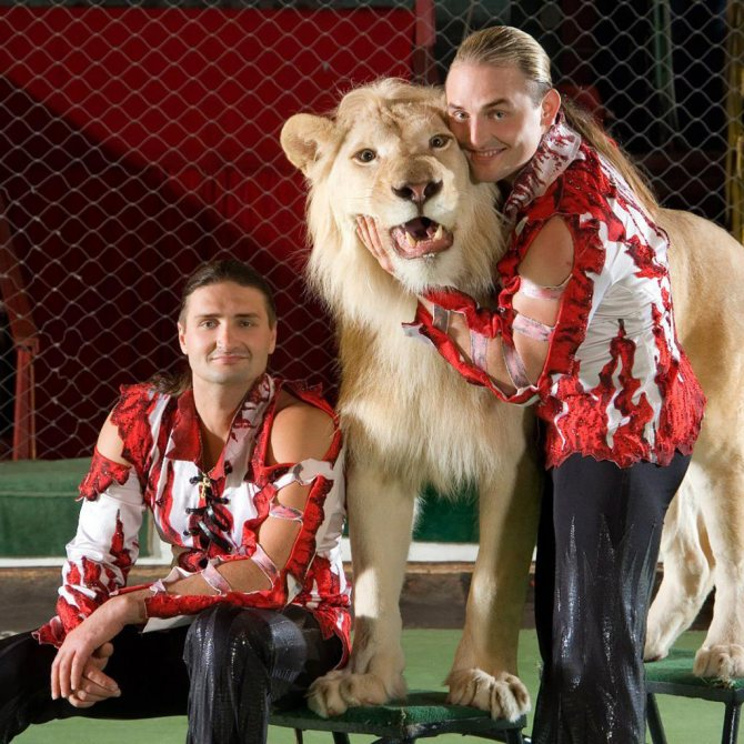 Братья со львом