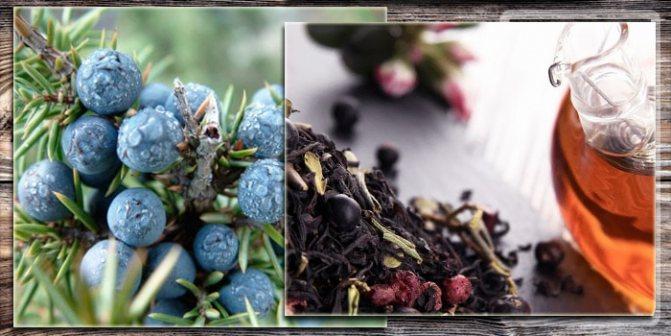 Целебный настой с шалфеем и ягодами можжевельника