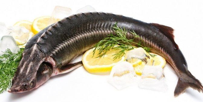 Ценнейшая из пресноводных рыб