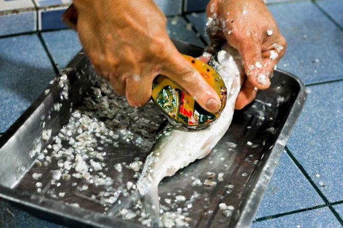 чистить рыбу ложкой