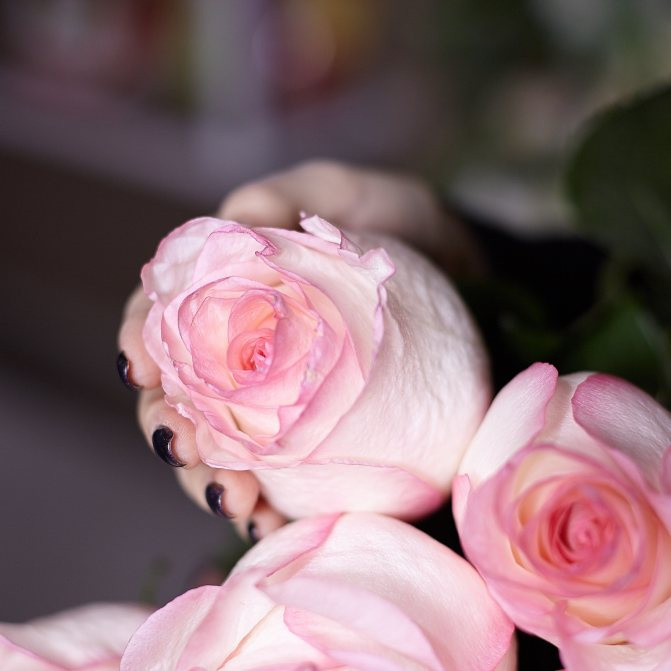 Что добавить в вазу с розами, чтобы они дольше стояли