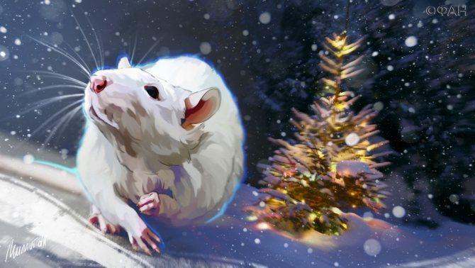 Что можно дарить на Новый 2020 год Крысы, а какие подарки принесут неприятности
