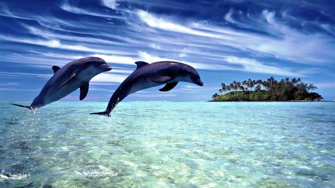 Что означает дельфин во сне