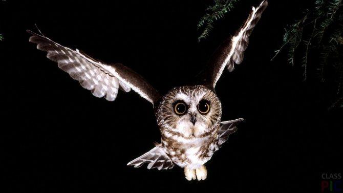 Что означает сова как символ в доме