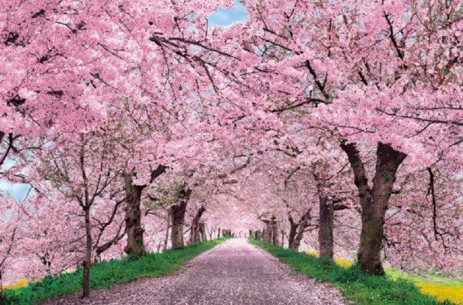 цветущий сад во сне