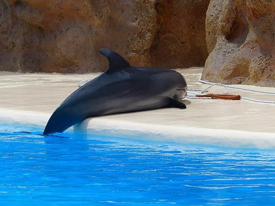 дельфин на берегу