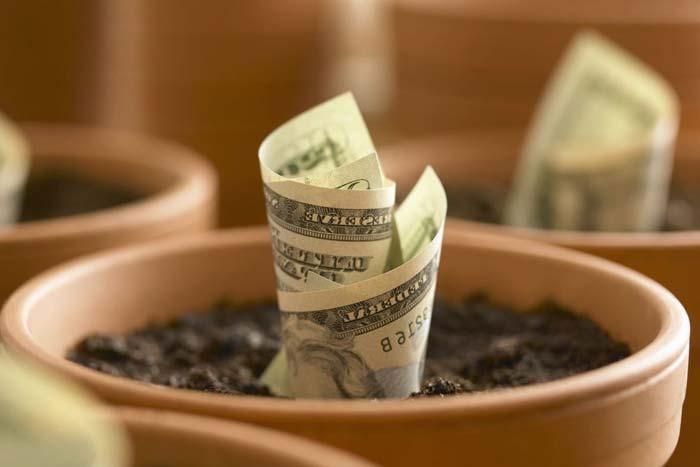 деньги в горшке