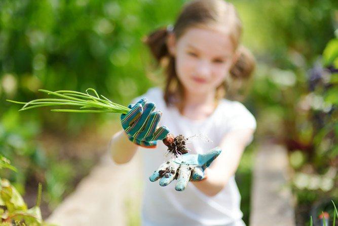 Девочка в перчатках держит зеленый лук
