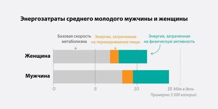 Энергозатраты среднего молодого мужчины и женщины