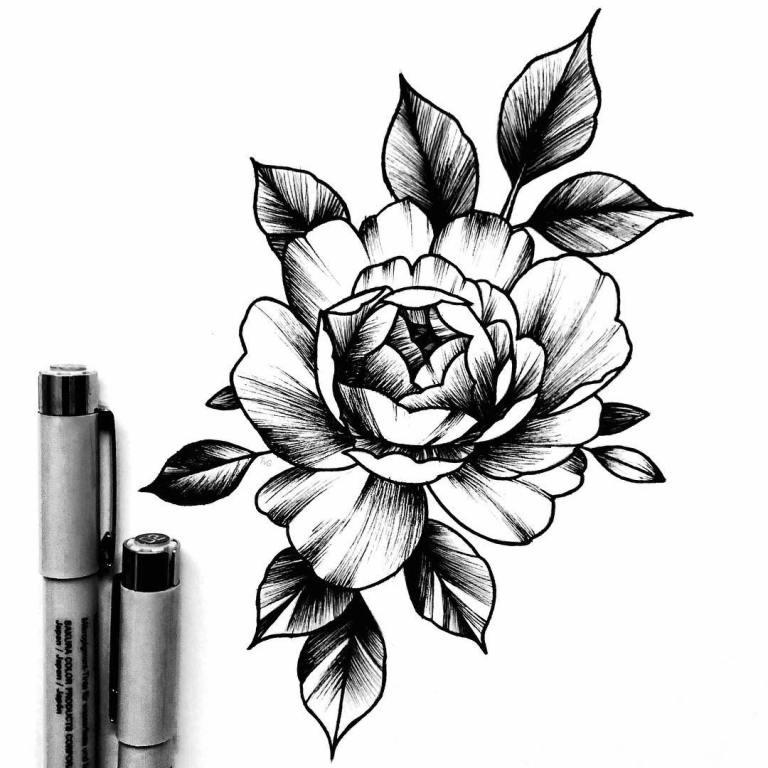 Эскиз розы