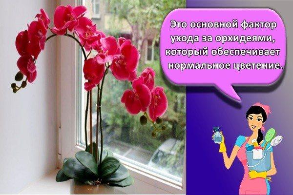 Это основной фактор ухода за орхидеями, который обеспечивает нормальное цветение.