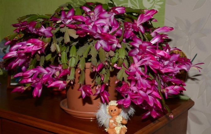 Фото с сайта: livejournal.com