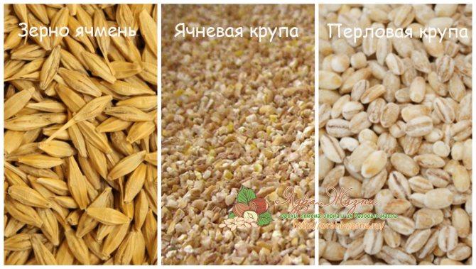 Фото: зерна ячменя, ячневая крупа, перловая крупа - отличия