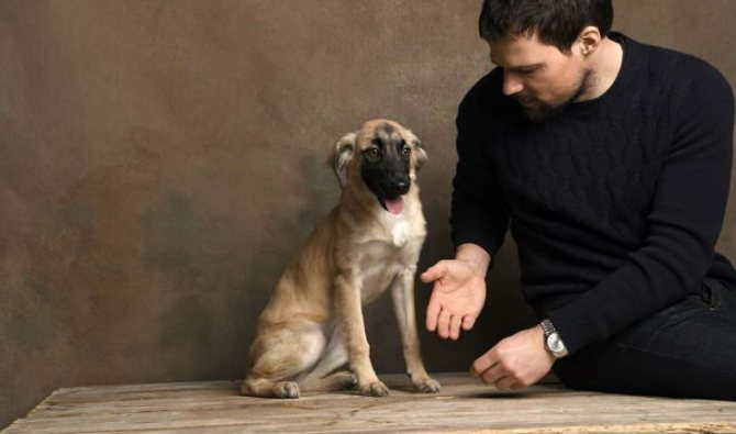 Груша, собака Данилы Козловского