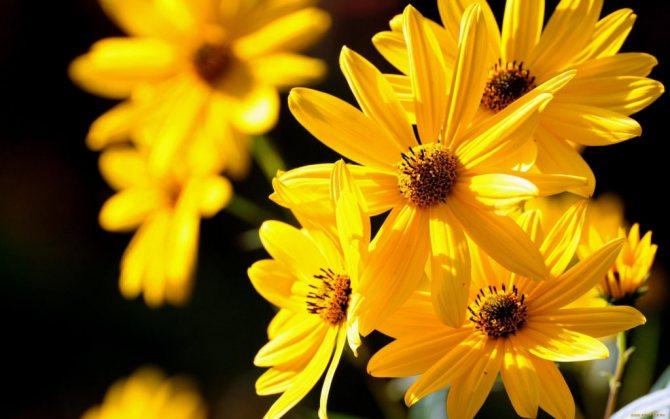 к чему дарят желтые цветы