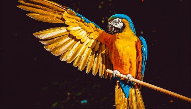 К чему снится птица, залетевшая в дом