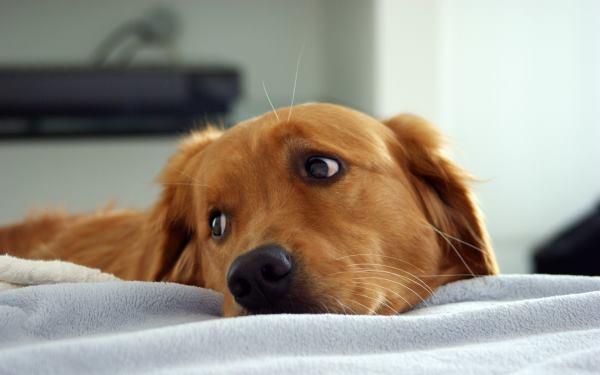 к чему снится убитая собака