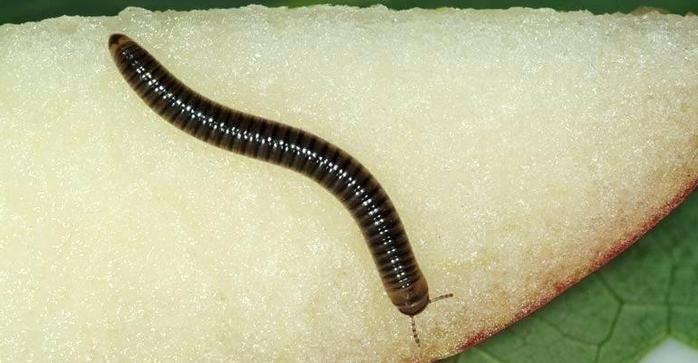 К чему снятся черви во сне женщине: полное толкование по сонникам || Сонник червяки из носа