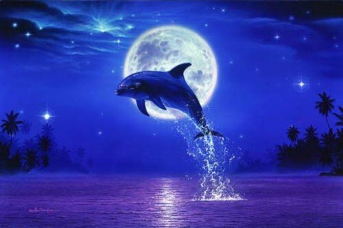 К чему снятся дельфины ночью