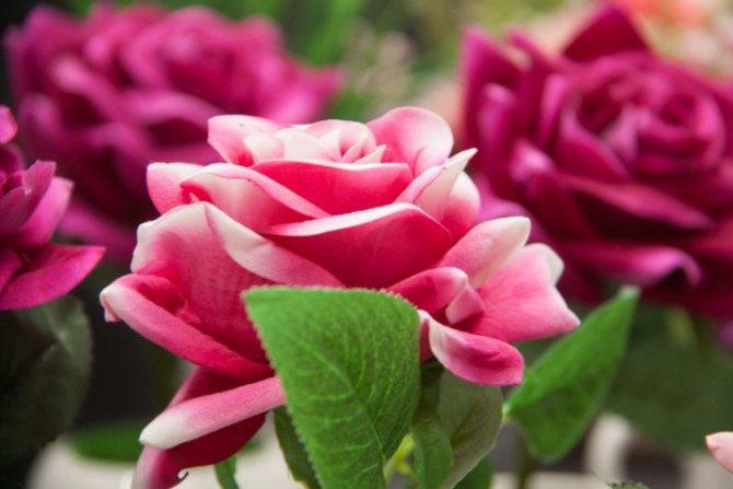 Как часто следует дарить девушкам цветы? Узнали у представительниц прекрасного пола