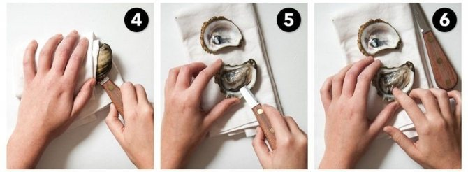 Как достать устрицу из раковины