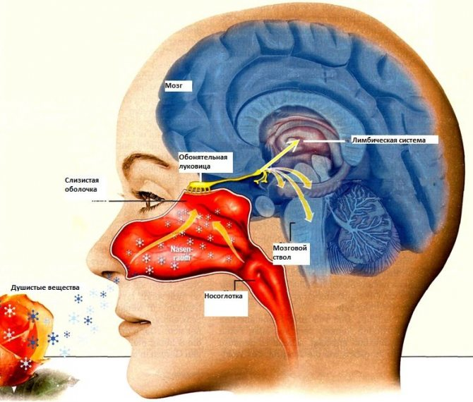 Как эфирные масла влияют на гормоны. Часть 2, фото № 1