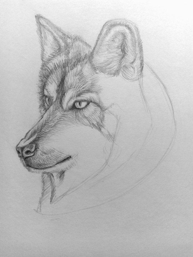 Как нарисовать волка карандашом? Поэтапный урок. Шаг 14. Портреты карандашом - Fenlin.ru