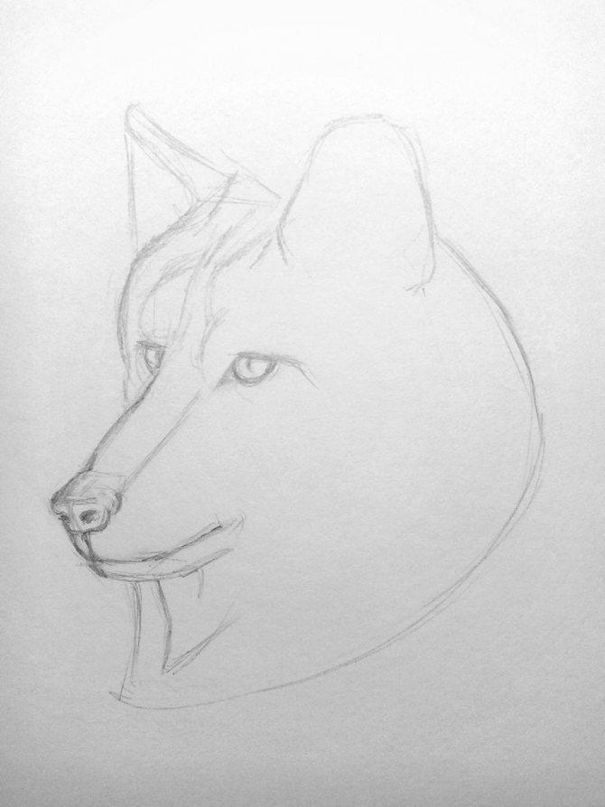 Как нарисовать волка карандашом? Поэтапный урок. Шаг 6. Портреты карандашом - Fenlin.ru