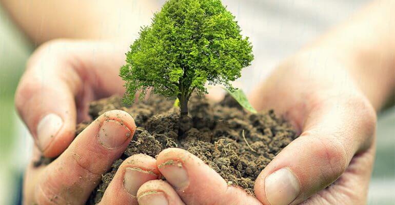Как посадить денежное дерево для привлечения денег по фэн-шуй: