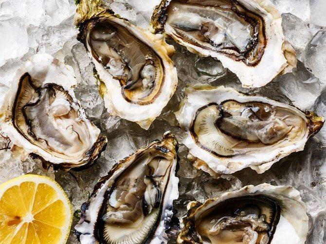 Как правильно есть устрицы, рецепты лучших моллюсков