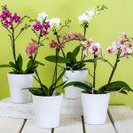 Как ухаживать за орхидеей в домашних условиях правильно