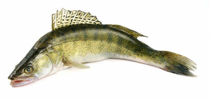 Какая самая полезная рыба для человека