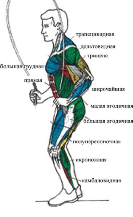 Какие мышцы работают во время прыжков на скакалке