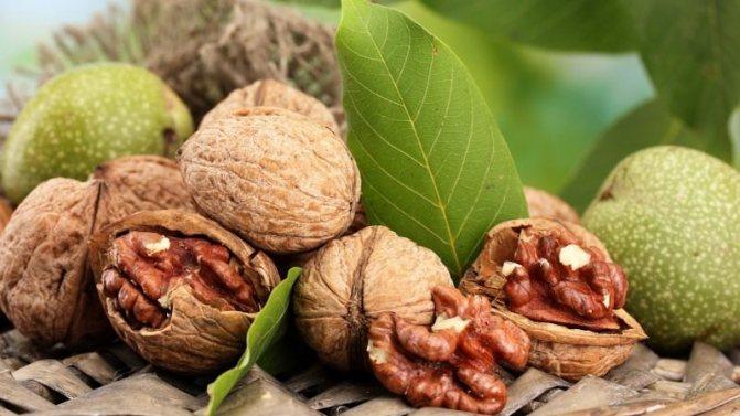 Какие орехи самые полезные для организма - грецкий орех
