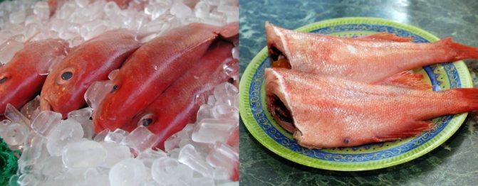 какую выбрать рыбу