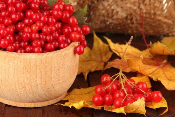 калина плоды полезные свойства