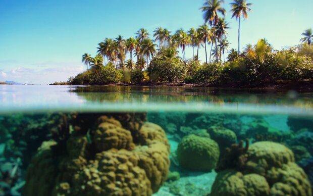 Кокос: пальмы