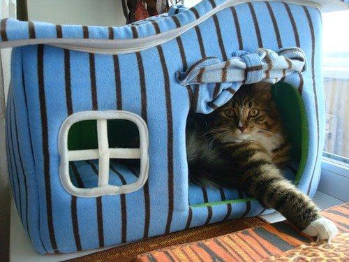 Кошка в убежище