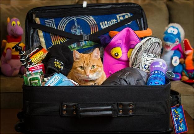 Котик в чемодане