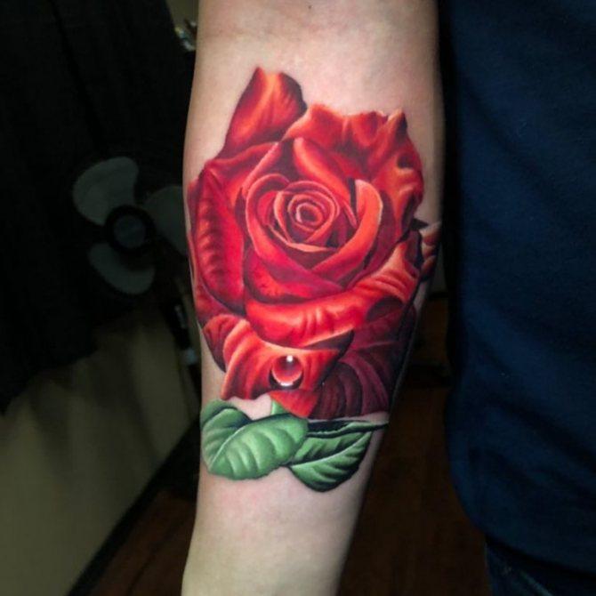 Красная роза с росой