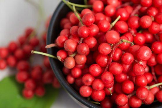 Лимонник ягоды полезные свойства и противопоказания