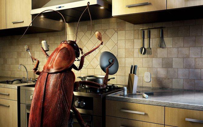 Маленькие жучки на кухне