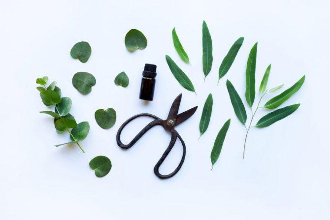 масло чайного дерева для волос