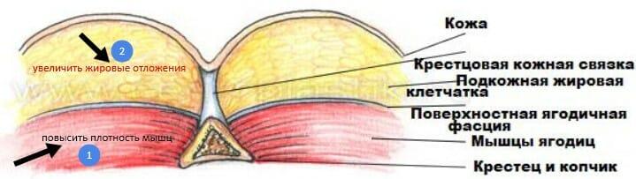 механика увеличения ягодиц