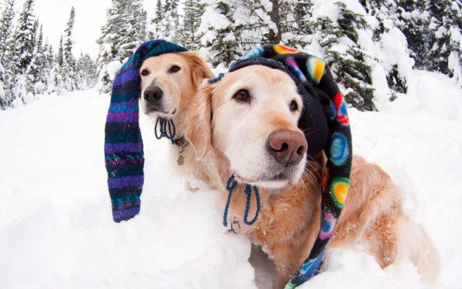 Меню на Новый год Собаки 2018: простые и вкусные рецепты с фото